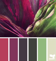 Unique fall inspired home design colors - Nature hues with berry red, purple, and green.