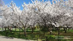 Parcul Tineretului Bucuresti Plants, Park, Plant, Planets