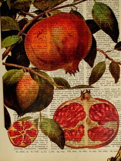 Pomegranate Dictionary book page print Vintage by OnceTattered