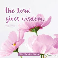 For the Lord gives wisdom; from His mouth come knowledge and understanding. Proverbs 2:6 (NKJV)