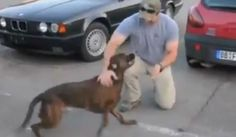 Dog Welcomes Home Soldier