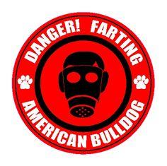 Danger! Farting American Bulldog