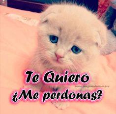 Imagenes De Gatitos Tiernos Con Frases De Amor Tierno Cats Cute