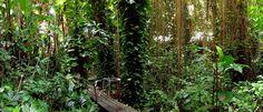 Los bosques como pieza clave contra el cambio climático - https://www.meteorologiaenred.com/los-bosques-pieza-clave-cambio-climatico.html