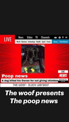 Black Labrador Dog, Black Lab Puppies, Travel Money, Labradoodle, Dog Quotes, Stock Market, Labrador Retriever, Dogs, Labrador Retrievers