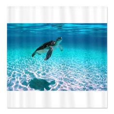 CafePress juvenile turtle at Seven Mile Beach large poster Shower Curtain Standard White * Visit the image link more details.
