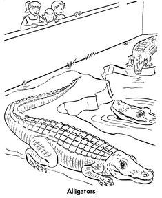 Zoo Reptile Coloring Page Free Printable Alligators Pages Featuring Wild Animal Sheets