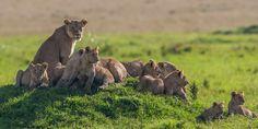 Go On Safari - Colores magicos de Kenia...
