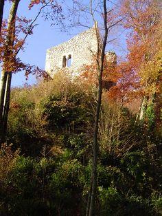 Au Nord de Saint Ismier, proche des premiers contreforts du massif de la Chartreuse, somnole un vieux château fort. Grâce à des bénévoles, les murs ont été consolidés et les abords ont été débarassés de la piquantes végétations.... Déguster cette romantique ruine en automne est un plaisir que je ne me refuse jamais.