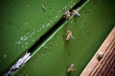 Beekeeping Basics: Before You Get Started