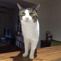 おやすみなさい#goonight #cat #猫 #lovecats
