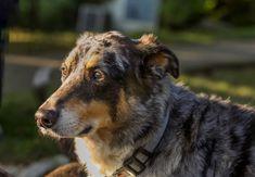 #princeton is one of the most popular #dogs on the block. #millburnnj #dogdaysofsummer #morningwalk Dog Days, Walking, Popular, Marketing, Lady, Places, Modern, Dogs, Summer