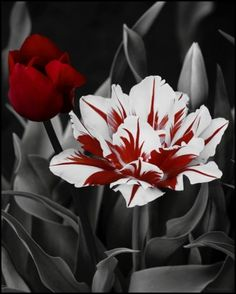 I'm not sure if this is a painting or a photo, but either way this flower is beautiful!