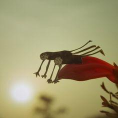 Fragili e romantiche figure di carta che si staccano dal foglio e partono verso un mondo di avventure. Le realizza Kouichi Chiba. Il fotografo giapponese che vive a Shizuoka, ha creato e ritagliato una serie di stravaganti personaggi che volano, fluttuano e restano sospesi in aria tra steli, alberi