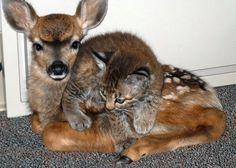 Sıradışı Hayvan dostlukları, hayvanlar arasında dostluk, sevgi heryerde, güzel hayvan dostlukları, arkadaş olan hayvan resimleri