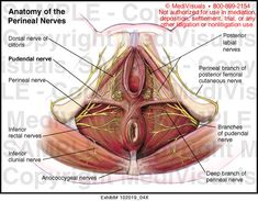 sacral nerve root compression - Google Search