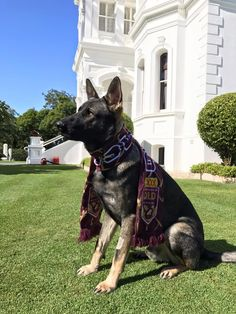 Dog too friendly for police service re-assigned to publicity at Queensland House http://ift.tt/2t31Ymj