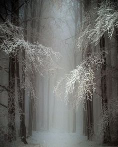 """""""Are ye the ghosts of fallen leaves, O flakes of snow, For which, through naked trees, the winds A-mourning go?""""  ― John B. Tabb."""