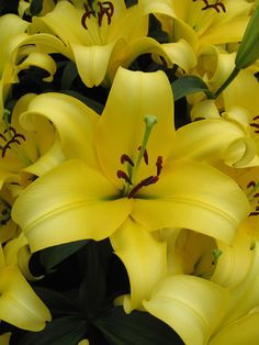 We are America's largest grower and online retailer of high quality daylilies, iris, peonies and other premium perennials.