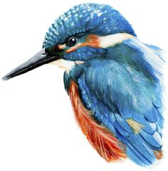 Graphic design and illustration in Weymouth, Dorset Frog Pictures, Pictures To Draw, Bird Illustration, Graphic Design Illustration, Anna Mason, Kingfisher Bird, Bird Sketch, Crayon Art, Bird Drawings