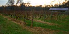 Bottoms up! Exploring Pennsylvania wine country in autumn on Roadtrippers