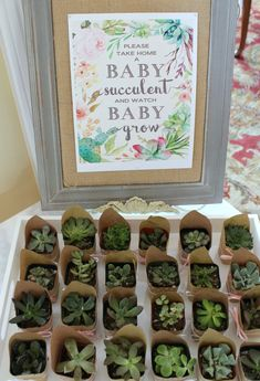 Take home a baby succulent - baby shower favors! Baby Shower Games, Baby Boy Shower, Gender Neutral Baby Shower, After Baby, Holiday Decor, Advent Calendar, Home Decor, Shower Ideas, Succulents
