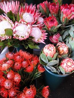 Spring has come to the sidewalks of West Street between and Avenues. Henri Matisse, Whimsical Wedding Flowers, King Protea, Protea Flower, Bloom Blossom, Colorful Plants, Pink Garden, Flower Market, Flower Power