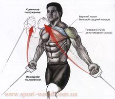 Как накачать грудь на тренажерах