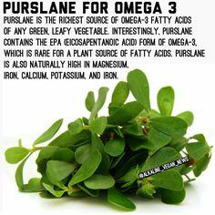 Alkaline Foods Dr Sebi, Alkaline Diet, Natural Health Tips, Natural Health Remedies, Holistic Remedies, Herbal Remedies, Healing Herbs, Natural Healing, Health Advice