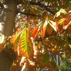 Ya está aquí... #otoño