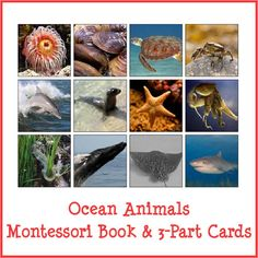 Ocean Animals Book & 3-Part Cards - Gift of Curiosity