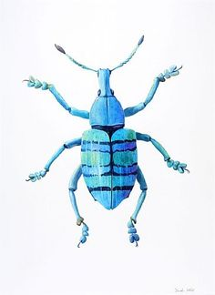 Weevil - weevil, insect, beetle, bug by Dinah Wells