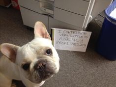 I have found the same to be true of my office cats. #Dogshaming