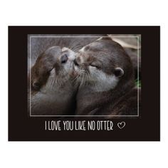 I Love You Like No Otter Cute Photo Postcard - valentines day gifts diy couples special day