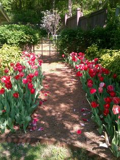 Clinton House Museum First Ladies Garden. http://9nl.eu/ClintonHouseMus Stroll thru the 1st Lady Garden @ the Clinton's 1st home - featuring flowers dedicated to various 1st Ladies.