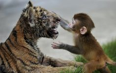 <b>If these unlikely interspecies buddies can make it work, there's hope for us all.</b>