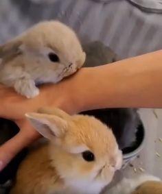 Cute Baby Bunnies, Baby Animals Super Cute, Cute Wild Animals, Cute Little Animals, Cute Funny Animals, Animals Beautiful, Animals And Pets, Cute Bunny Pictures, Baby Animals Pictures