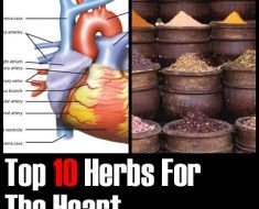 Top-10-Herbs-For-The-Heart1