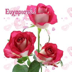 Happy Friendship Day, Good Morning Quotes, Diy And Crafts, Beautiful Pictures, Thankful, Feelings, Rose, Flowers, Plants