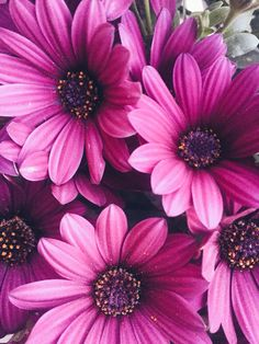#flowers#pink