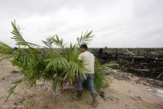 Emberkísérlet: jobb az élet pálmaolaj nélkül? - Dívány Plants, Plant, Planets