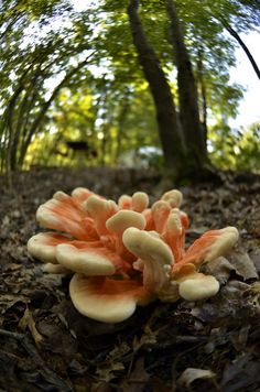**Cream & Orange