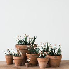 DIY Paper Flowers   Aged Terracotta Pots - Magnolia Market