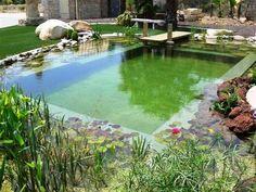Estanque de natación, piscinas naturales, biológica,