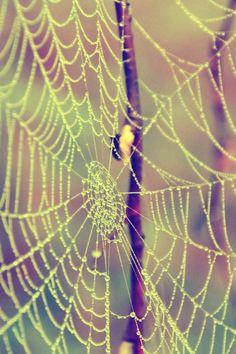 Web Drops Dew Branches iPhone 4s wallpaper