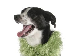 Nell copyright 2012 zendog pet portraits