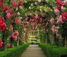 加拿大。布查特花園