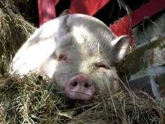 EASY VEGAN - der Film über Veganismus - Dokumentation Food Documentaries, Vegan, Friends, Easy, Quotes, Youtube, Animals, Movies, The Documentary