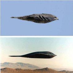 B-2 Bomber + Bird Profile in Flight - Imgur