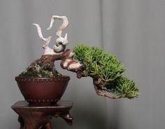 little green • best of tumblr generator Bonsai Tools, Bonsai Art, Bonsai Plants, Bonsai Garden, Bougainvillea Bonsai, Bonsai Nursery, Mame Bonsai, Juniper Bonsai, Oriental